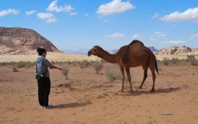 Der Wüstenritt