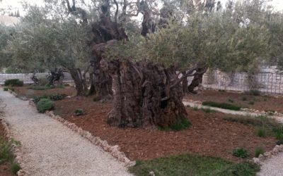 Baum-Gutschein statt Bares